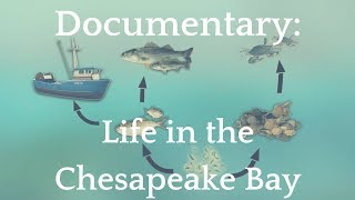 Documentary: Life in the Chesapeake Bay