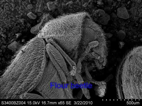 Images from a Scanning Electron Microscope