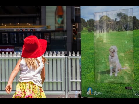 'Wait with a Mate' interactive panel by The Lost Dog's Home   JCDecaux Australia
