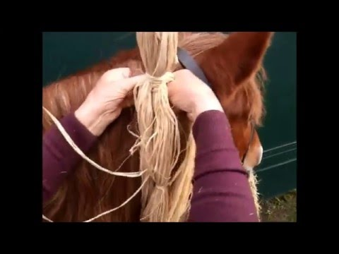 Heavy Horse Decorations braiding a Suffolk Punch mane with Lesley Miller