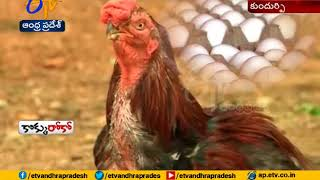 Kundurpi Village avoided Chicken & Mutton At Anantapur District