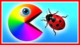 Learn colors with Pacman as he finds a ladybug, beetle, caterpillar and travels down a magic slide.