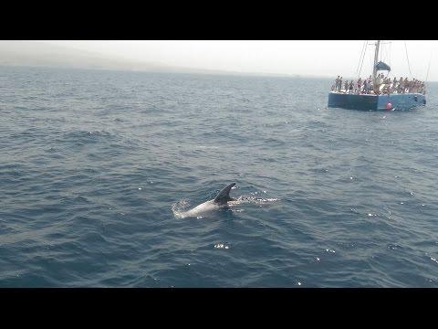 Dolphin Boat Trip - Puerto Rico, Gran Canaria - July 2015