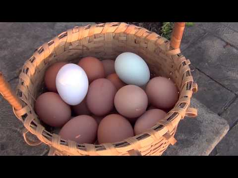 Nesting Box Tips and Tricks- Preventing Dirty or Eaten Eggs