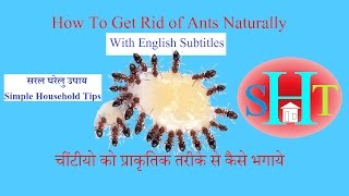 How To Get Rid Of Ants Hindi