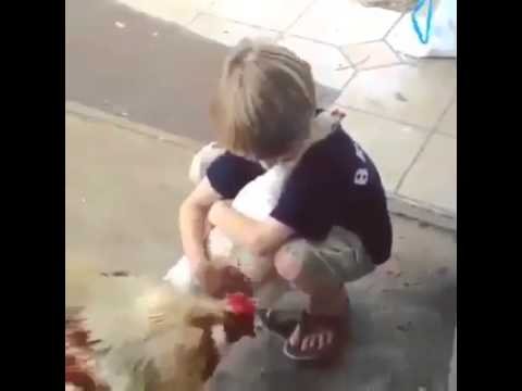 Cute Baby Playing with Hens