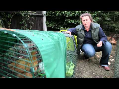 Hen Corner - 10 Top Tips #9 Foxes, Rats and Mice