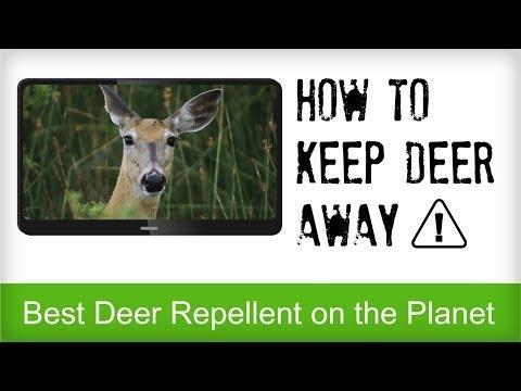 Best Deer Repellent Reviews | Natural Recipe for Repelling Deer | Animal Control