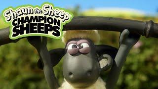 ChampionSheeps - Weightlifting [Shaun the Sheep]