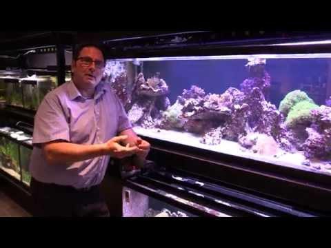 Understanding PAR for Aquarium Lighting