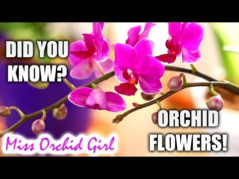 Did you know this about: Orchid flowers and flower spikes?