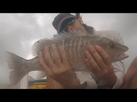 Mangrove Snapper Fishing - How to catch