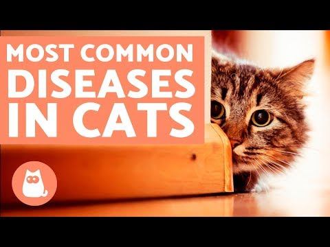 The 10 Most Common Diseases in Cats