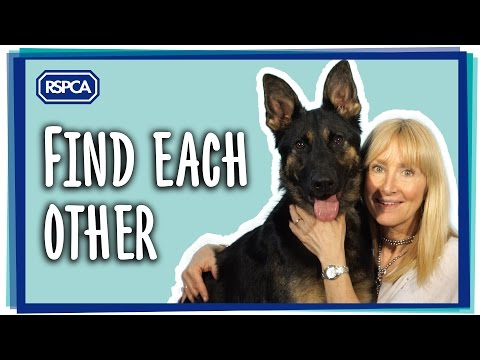 Rehoming at RSPCA