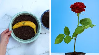 5 Innovative Hacks to Grow Roses at Home!! Blossom