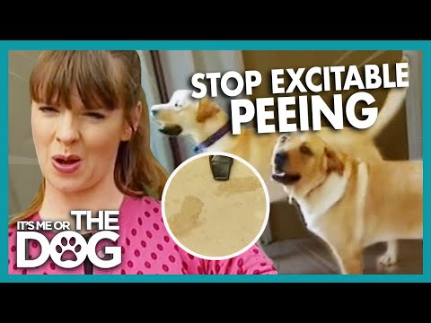 How To Stop Your Dog Peeing In The House