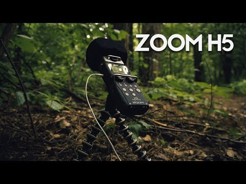 FOREST RAIN: Zoom H5 Test Recording