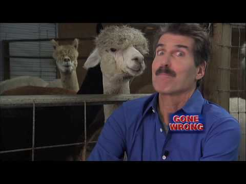 Alpacas and Taxes