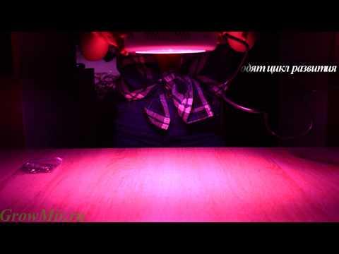 Led лампа для растений Grit UFO 50W