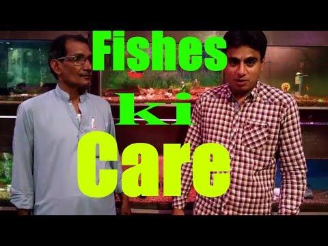 Aquarium Fish Diseases | Apni Fishes Ki Care Kese Karin | Aquarium Store
