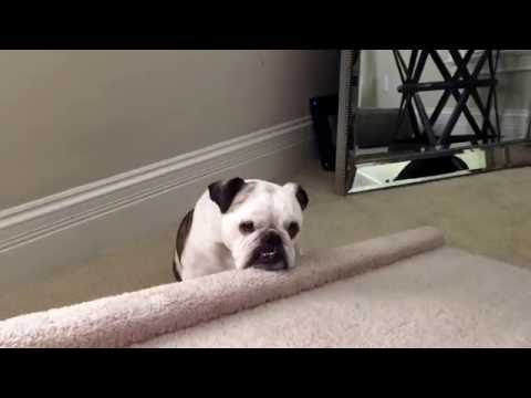 Bulldog Ramp to get on bed, to stop her from jumping off and hurting herself.