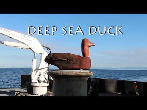 Deep Sea Duck