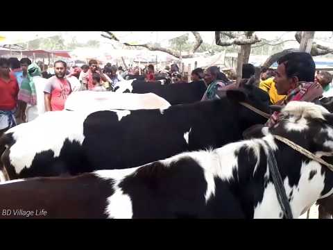 Dairy cow market with prices / BD Village Life