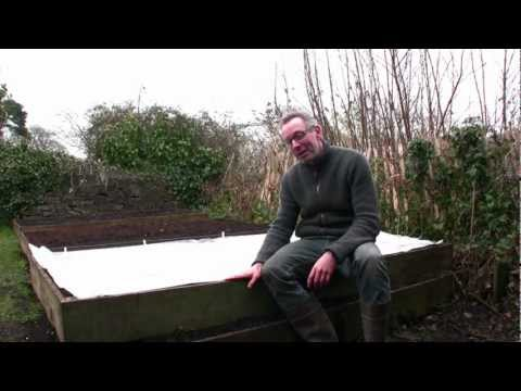 March on Peter's Plot: How to Sow Salad Leaves