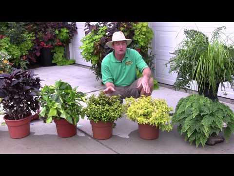 Foliage Plants: Part 1