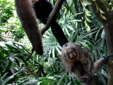 Sentosa Island-Singapore Zoo (Part 3)