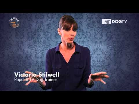 DOGTV - Victoria Stilwell 354 seconds on Barking
