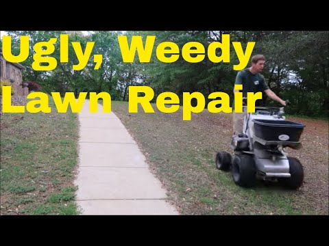 Ugly, Weedy Lawn Repair with Spring Fertilizer Application