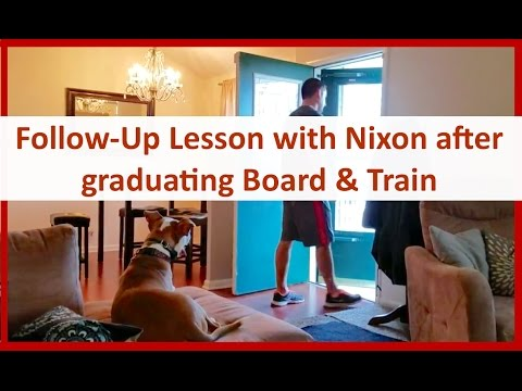 Columbus Ohio Dog Trainer Follow-Up Lesson with Nixon the Pit Bull after Graduating Board & Train
