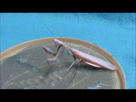 Forgot my Mantis!