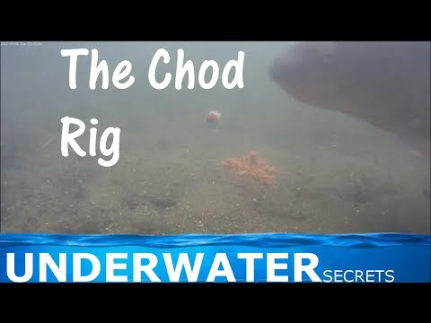 Underwater view of the chod rig carp fishing