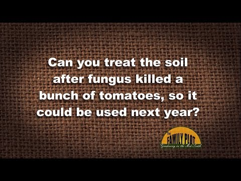 Q&A – Can you treat the soil to kill tomato fungus?