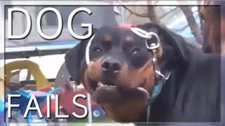 BEST DOG FAILS EVER (COMPILATION) 🐶