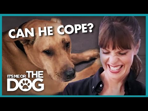 Successful Separation Anxiety Training | It's Me Or The Dog