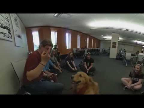 Ohio University therapy dogs: Meet Bullet (in 360)
