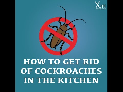 How to Get Rid of Cockroaches in the Kitchen
