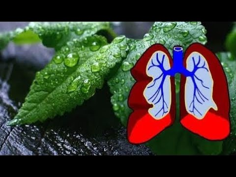 This Powerful Herb Can Cleanse Your Lungs Of Dust Mold Bacteria And Chemicals How To Use It