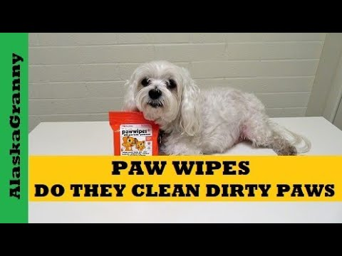 Paw Wipes Do They Clean Your Dog's Feet