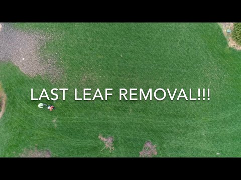 Last Leaf Removal Of The Year!!!