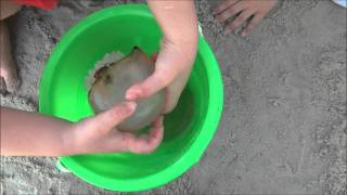 Kids Playing with Jellyfish on Tybee Island (HD)