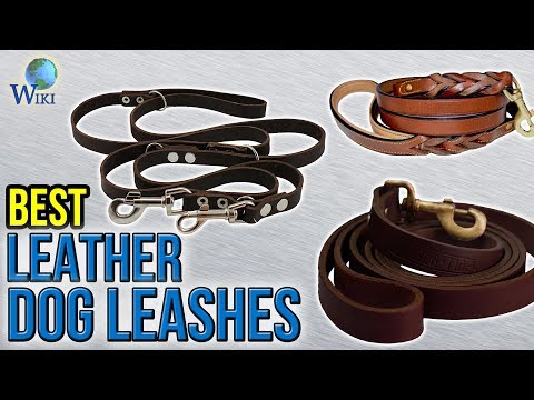 10 Best Leather Dog Leashes 2017