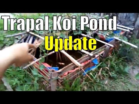 trapal koi pond in the philippines this is the trapal pond I built last Sept 2016