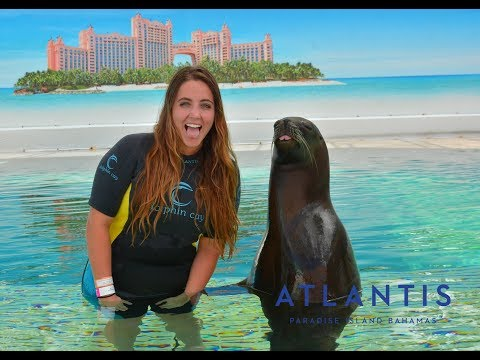 Swimming With Sea Lions at Atlantis, Paradise Island | Carnival Breeze Cruise Ship