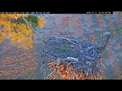 Lake Murray Osprey 1