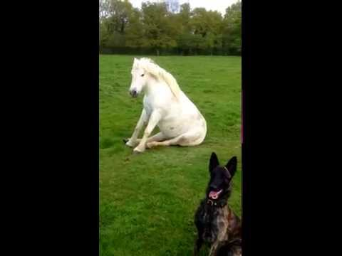 Teaching the Dog and Horse to sit!
