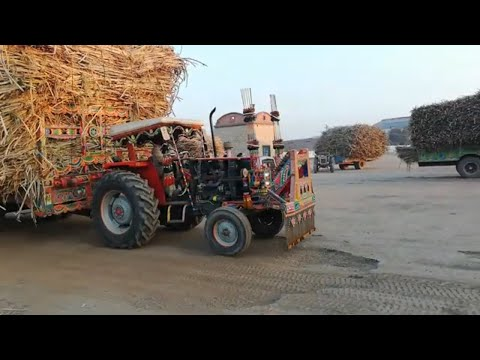 Massey 385 with Sugarcane Trolley & Pulling Stunt in Madina Sugar Mill